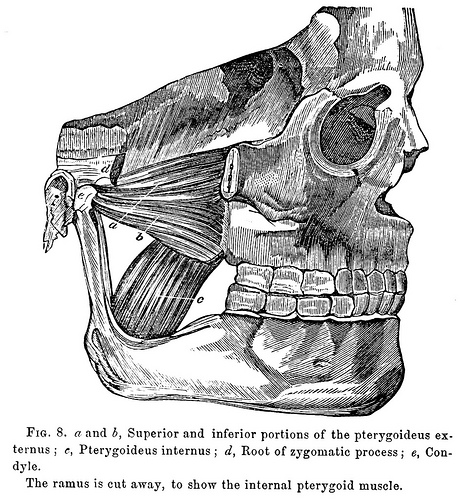 A manual on extracting teeth (1868)